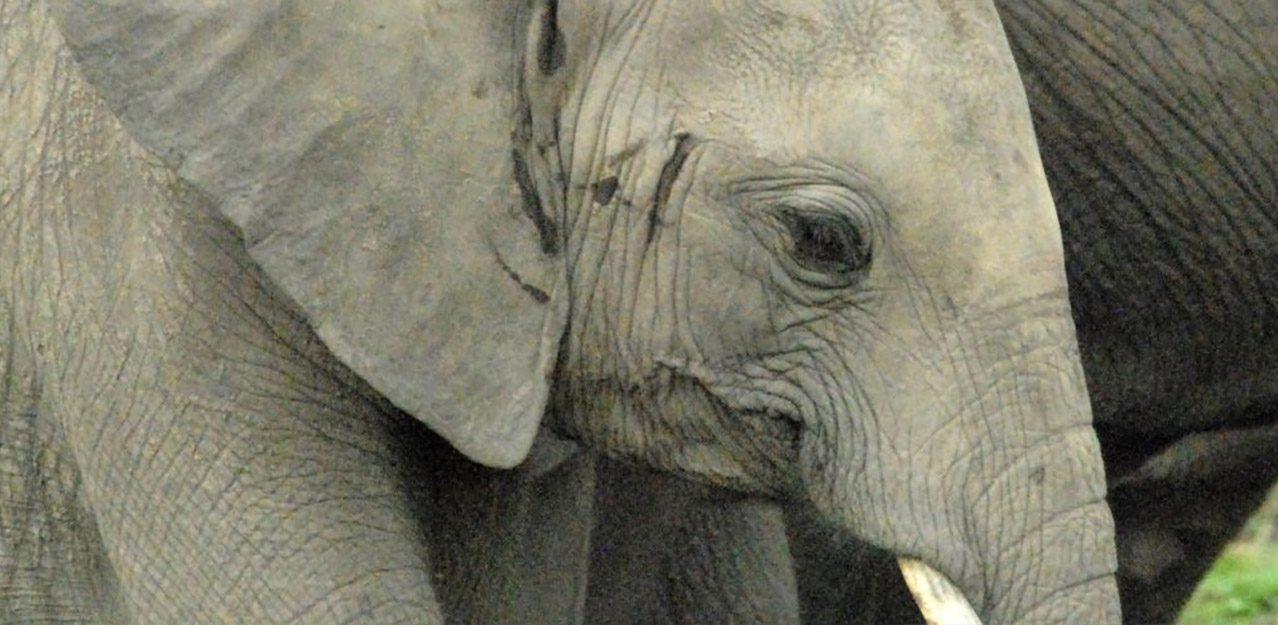 World Animal Protection campaign photo 3
