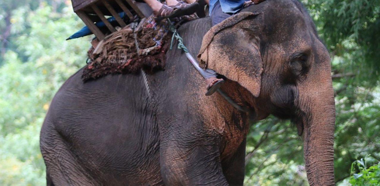 World Animal Protection campaign photo 2