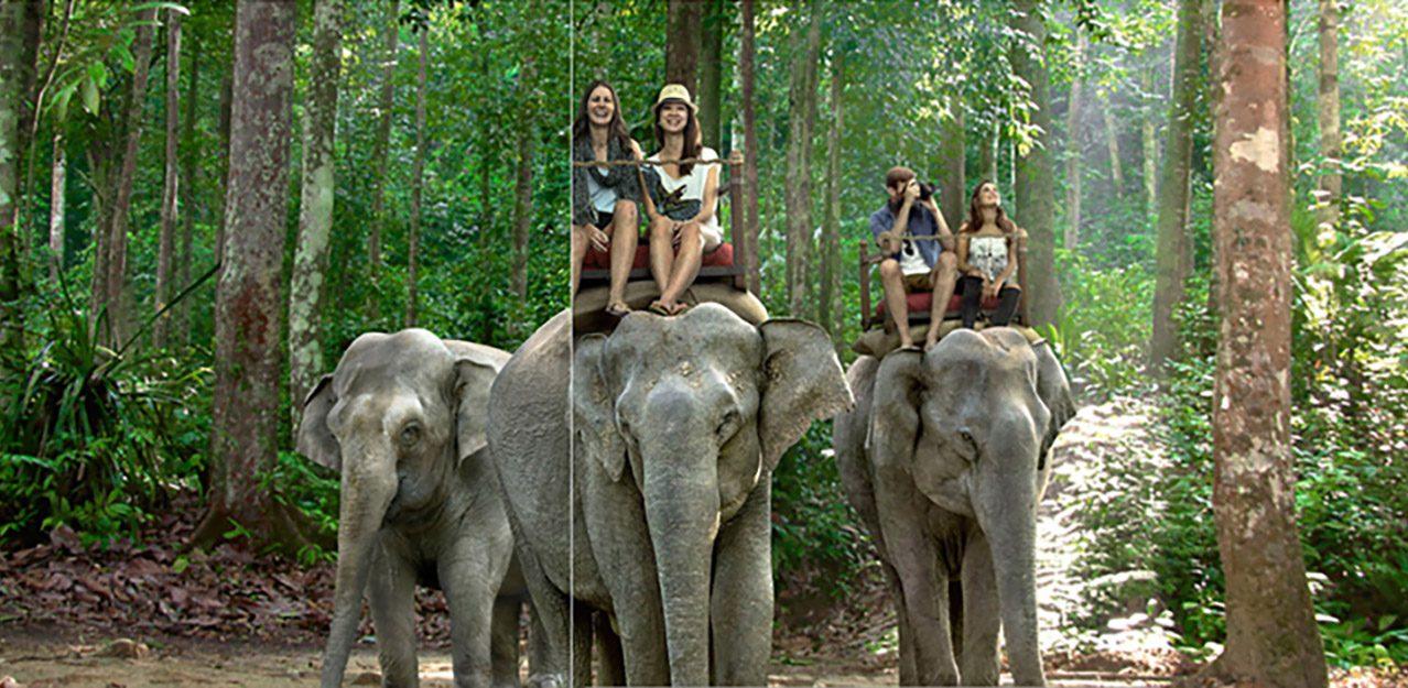 World Animal Protection campaign photo 1