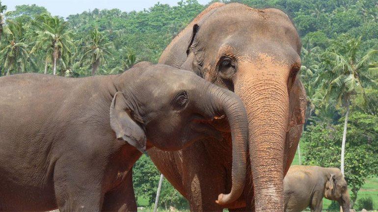 World Animal Protection campaign photo